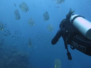 diving thailand_ (1)
