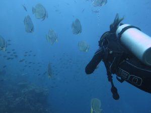diving thailand_ (1)