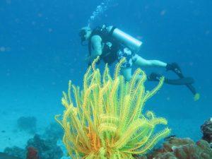 diving thailand_ (3)