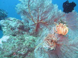 diving thailand_ (4)