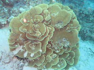 diving thailand_ (5)