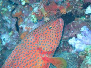 diving thailand_1 (1)