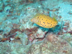 diving thailand_1 (3)