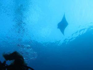 diving thailand_12