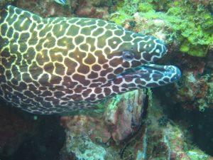 diving thailand_16