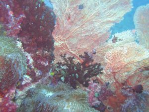 diving thailand_2