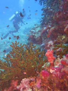 diving thailand_3
