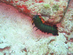 diving thailand_4