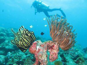 diving thailand_41