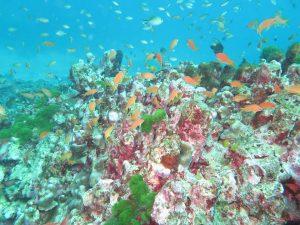 diving thailand_42