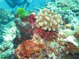 diving thailand_43
