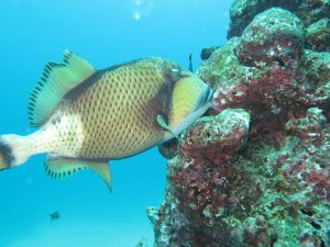 diving thailand_45