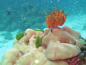 diving thailand_46