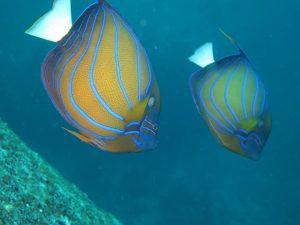 diving thailand_47