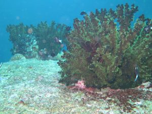 diving thailand_48