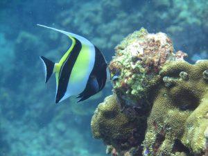 diving thailand_5