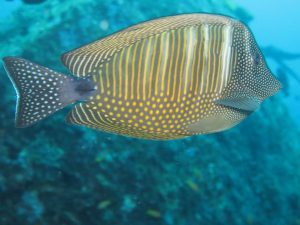 diving thailand_51