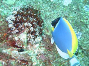 diving thailand_52