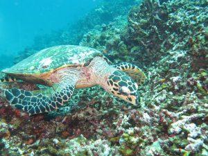 diving thailand_56