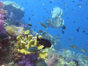 diving thailand_7