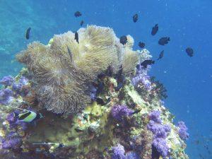 diving thailand_8