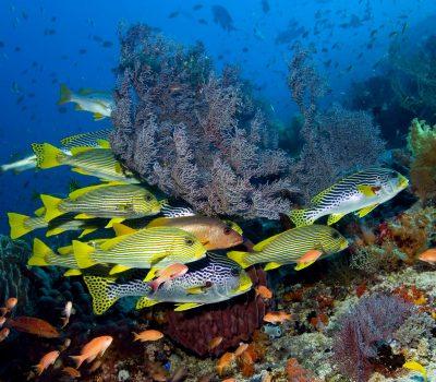 Подводният свят на Као Лак