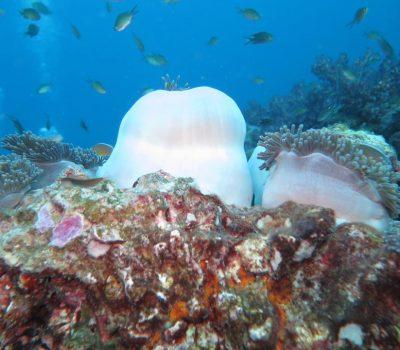 diving thailand_ (2)